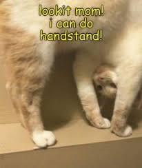 Cute gymnastics memes